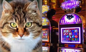 cats-slot-machines